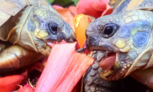 Arrêtez d'utiliser les tortues (animaux sauvages et menacés) dans des films
