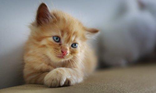 Pétition : Sauvons les chats errants de Wattignies