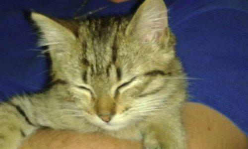 Pétition : Disparition inquiétante et maltraitance des chats