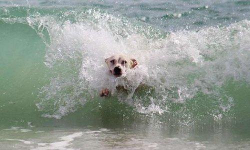 Droit des chiens d'accéder aux plages et bord de mer