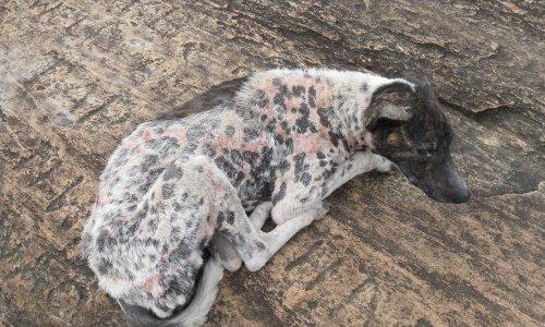 Pétition : Amendes pour tous les chiens attachés avec 1 m de chaine