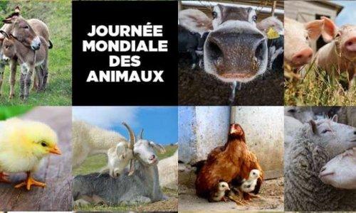 Unification des associations de protection animals
