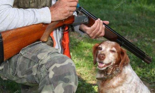 Peine exemplaire avec prison ferme pour l'individu ayant assassiné son chien d'une balle dans la tête à Solesmes ( 59 )