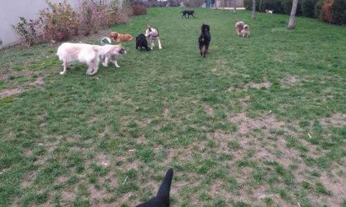 Un parc canin pour une meilleure cohabitation