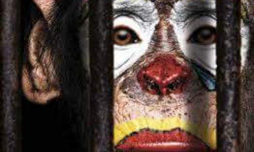 Non aux cirques avec animaux sauvages et domestiques !