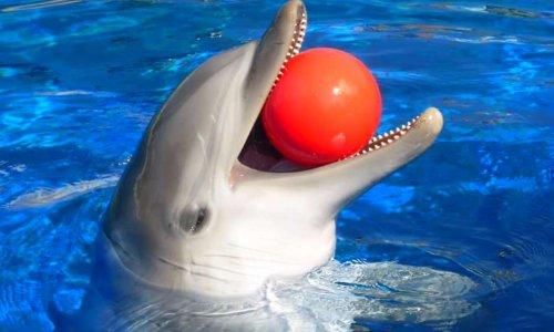 Protégeons tous les delphinariums en France