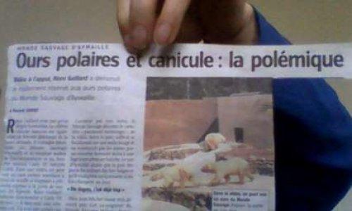 Fin de détention d'ours polaires au monde sauvage d'Aywaylle