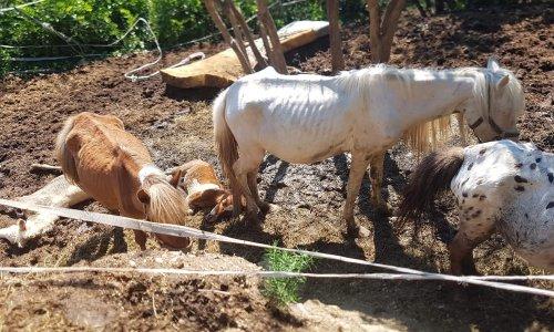 Interdiction de détenir des animaux à vie pour cette éleveuse