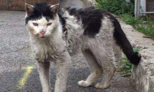 Pour que la Mairie de Montreuil se soucie du sort des chats errants de la ville.