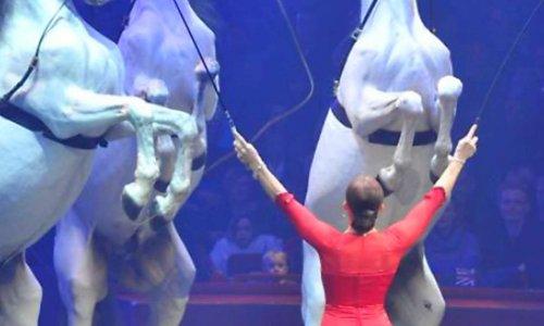 Protégeons notre cirque arlette Gruss avec nos animaux tigres chameaux chevaux lions