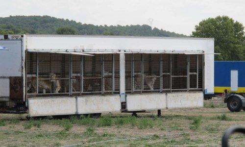 Nous refusons les cirques avec animaux dans le Vaucluse