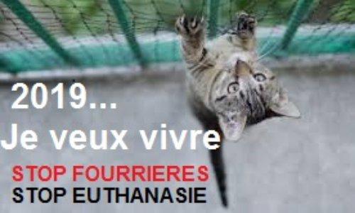 Petition Stop A L Euthanasie Des Animaux Errants Arretons Le