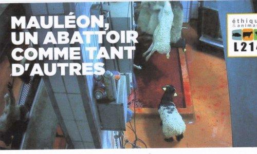 Pétition : ABATTOIRS : L'HORREUR et LA HONTE  !  La maltraitance des animaux n'est pas un délit, mais la tromperie sur la qualité des