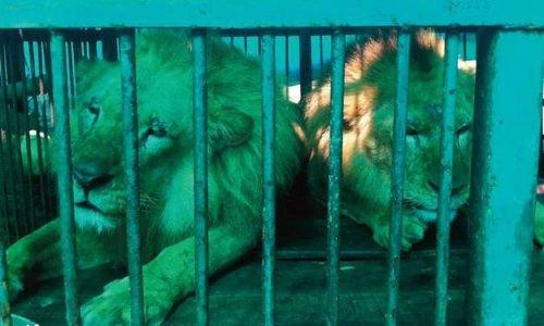 """Interdiction de """"cirques avec animaux """"  à Noisy Le Grand"""
