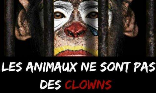 Le Quesnoy : Pour des cirques sans animaux dans ma ville !