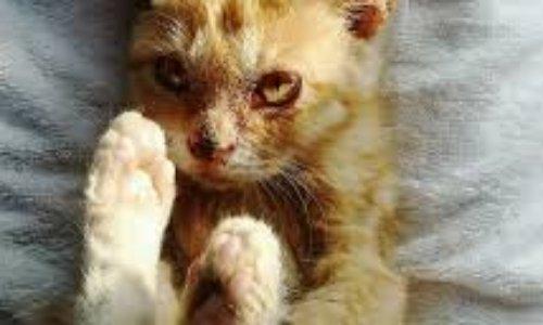 À Martigues les chats du cimetière Saint-Joseph sont en danger.