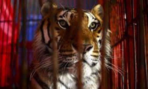 Interdiction de cirques avec animaux dans le pays de Gex
