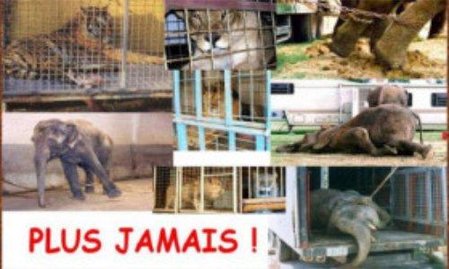 Pétition : Non au cirque avec animaux à Le Mée sur Seine