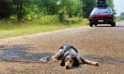 Interdire la vente et le commerce d'animaux de compagnie - SIGNER et PARTAGER pour qu'un projet de loi voit le jour