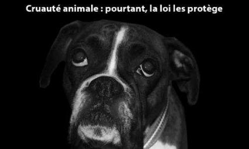 Loi et animaux : appliquons la loi !