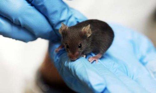 Arrêtez les tests sur les animaux et l'usage d'huile de palme pour les cosmétiques