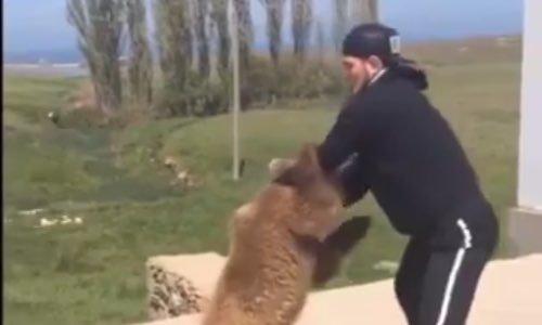 Pétition : Non à l'utilisation des ours comme punching-ball
