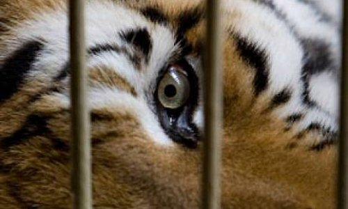 Pétition : Non aux cirques avec animaux dans la commune d'Annecy