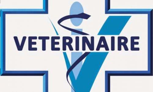 STOP aux frais de vétérinaire trop cher !