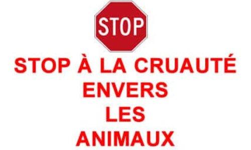 STOP A LA MALTRAITANCE SUR TOUS LES ANIMAUX