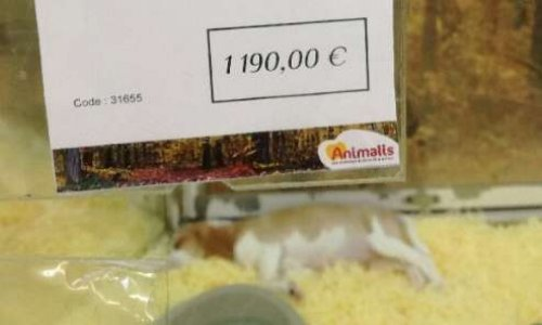 Interdiction de la vente de chiots par Animalis