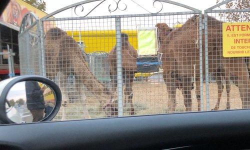 Stop aux cirques avec animaux au centre commercial de Labège et ses alentours