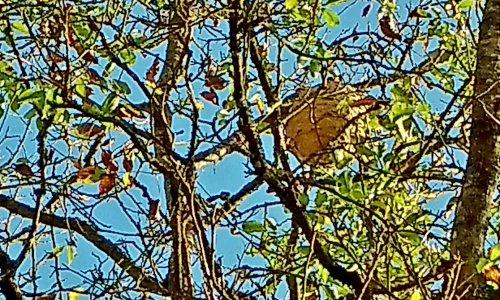 Pétition : Indemnisation des frais de destruction des nids de frelons asiatiques
