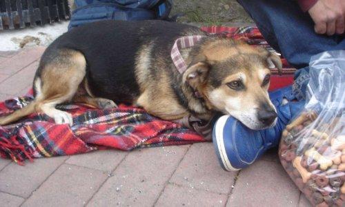 Pétition : Pour la création de centres d'hébergement des personnes sans abri et de leur(s) chien(s) dans toute la France