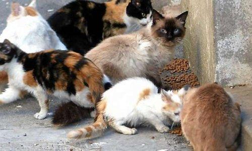 Stérilisation des chats errants sur la commune de La Voulte sur Rhône