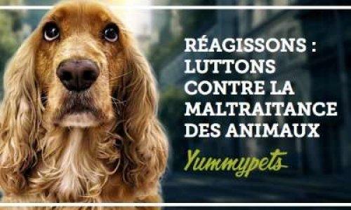 Pour que la cruauté envers les animaux sois punis !