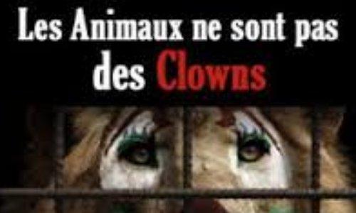 Interdiction des cirques avec animaux aux Herbiers