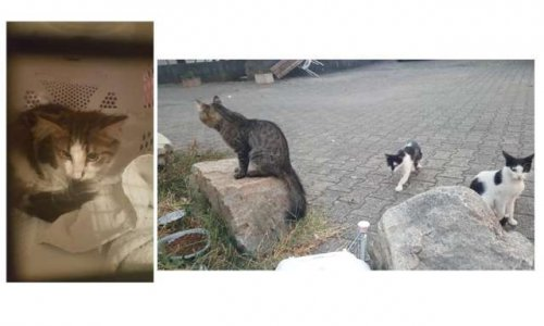 Pétition : Non à l'abandon de la campagne de stérilisation des chats errants de Chasse sur Rhône