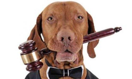 """Pour que l'animal obtienne le statut juridique de """"personne"""""""
