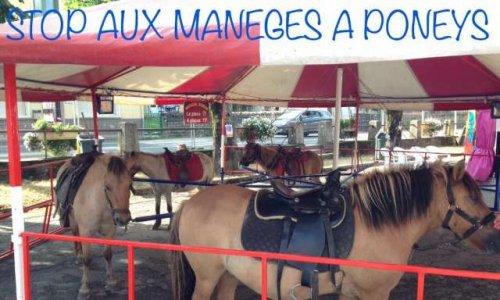 NON au manège à poneys et aux poissons rouges à la foire de la St-Martin à Bourg-en-Bresse (01)