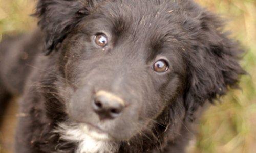 Stop à la cruauté ! CONTRE l'euthanasie injustifiée des animaux de compagnie et de ferme
