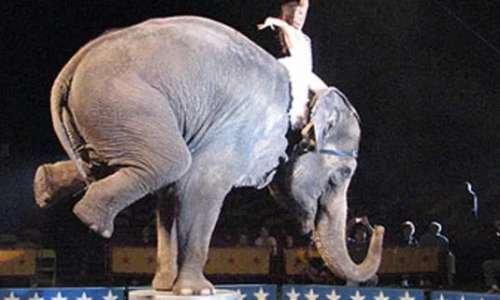Animaux dans les cirques, encore ?!