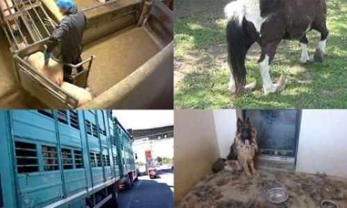 Pétition : Vote imminent à l'Assemblée nationale : demandons des  sanctions immédiates pour ceux qui maltraitent les animaux !