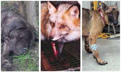 Pour un secrétariat d'État à la Cause animale
