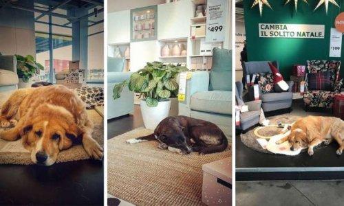 IKEA : un abris pour animaux abandonnés pour l'hiver !
