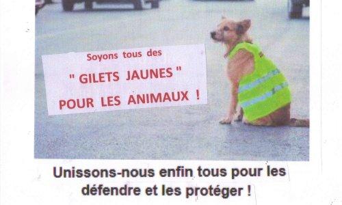 AMIS DES ANIMAUX, unissons-nous enfin tous pour les défendre et les protéger !