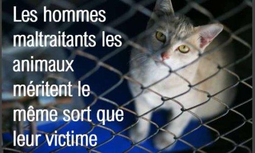 OUI à l'aggravation des peines de justice des actes de cruauté sur les animaux