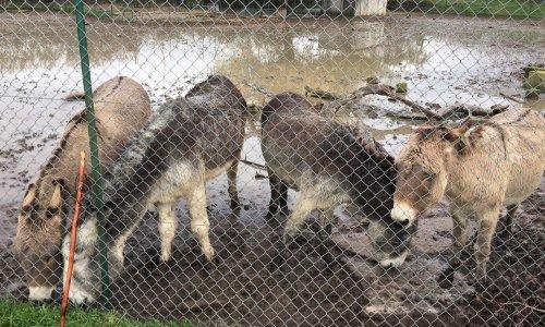 Sortez ces ânes de cet endroit dégoûtant, SPA d'Aix-en-Provence, SPA Salon-de-Provence
