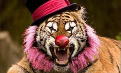 Interdiction des cirques avec animaux sauvages à Arras