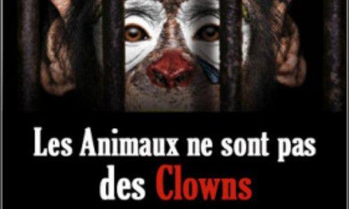 Interdire les cirques avec animaux à Angers