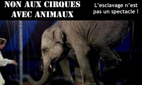 Non aux cirques avec animaux à Nice